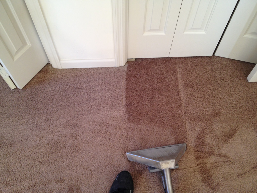 Pet Friendly Carpet Cleaning in Jacksonville, FL